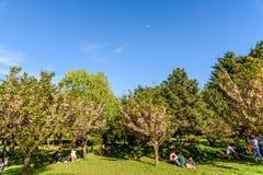 Les gens ayant l'amusement dans le jardin japonais du parc public de Herastrau la journée de printemps de week-end Image libre de droits