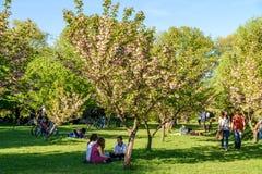 Les gens ayant l'amusement dans le jardin japonais du parc public de Herastrau la journée de printemps de week-end Photo libre de droits