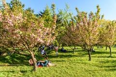 Les gens ayant l'amusement dans le jardin japonais du parc public de Herastrau la journée de printemps de week-end Image stock