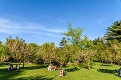 Les gens ayant l'amusement dans le jardin japonais du parc public de Herastrau la journée de printemps de week-end Images stock