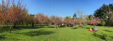 Les gens ayant l'amusement dans le jardin japonais du parc public de Herastrau la journée de printemps de week-end Photo stock