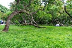 Les gens ayant le repos sur l'herbe dans le parc de Gorki Photo stock