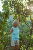 les gens cultivent la nourriture naturelle photographie stock libre de droits