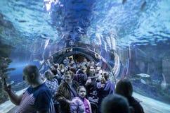 Les gens dans l'oceanarium images stock