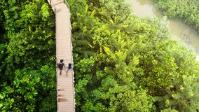 Les gens de l'homme et de la fille dans la vue supérieure marchent au passage couvert en bois de ciel Images libres de droits