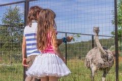 Les gens et les animaux Beaux enfants avec du charme jouant ayant l'amusement avec Photo libre de droits