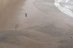 Les gens et les oiseaux dans les paires sur une plage image stock