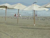 Les gens et les oiseaux de mer dans une plage, Canete, Lima, Pérou Photo stock