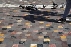 Les gens et les pigeons marchant avec l'ombre de fonte sur le plancher carré coloré de texture de marbre de forme dans le vieil e Photos stock