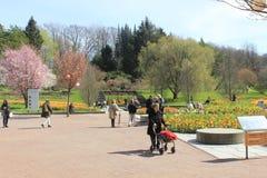 Les gens, fleurs, arbres, ressort, jour ensoleillé, jardin botanique de Gothenburg, Suède Images libres de droits