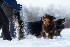 Les gens jouant avec des chiens dans la neige Photographie stock