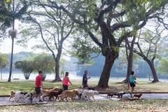 Les gens marchant avec des chiens en parc images libres de droits