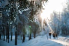 Les gens marchant le chien dans la neige dans la forêt d'hiver Photographie stock libre de droits