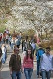 Les gens marchent entre les magnolias fleurissantes en parc de Kiev, Ukraine Images stock