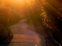 Les gens marchent le soir au coucher du soleil d'or Photo stock