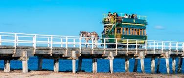 Les gens montant le chariot hippomobile chez Victor Harbor Image stock