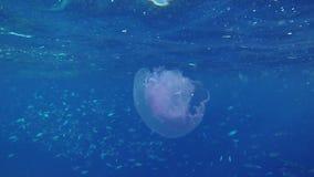 Les gens nageant avec des animaux de mer banque de vidéos