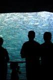 Les gens observant instruisant des poissons Images libres de droits