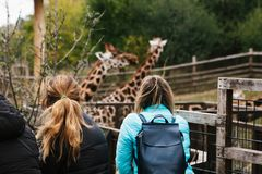 Les gens ou le groupe d'amis ou d'invités de zoo regardent des girafes Photos libres de droits