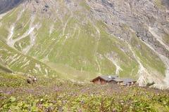 Les gens pataugeant par des fleurs à la hutte de montagne Photographie stock