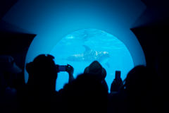 Les gens prennent des photos des dauphins Photographie stock