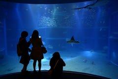 Les gens prennent la photo dans l'aquarium Photos stock