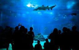 Les gens regardant l'espèce marine dans un aquarium Image libre de droits