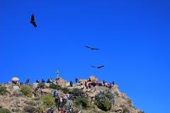Les gens regardant les condors Photographie stock libre de droits