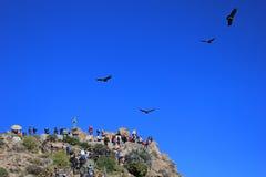 Les gens regardant les condors Photos libres de droits