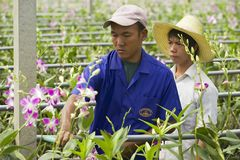 Les gens travaillent à la ferme d'orchidée dans Samut Songkram, Thaïlande Photographie stock