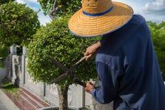 Les gens travaillent avec les arbres décorés Images libres de droits