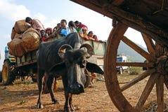 Les gens tribals d'Orissa au marché hebdomadaire. Photos libres de droits