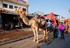 Les gens veulent monter le chameau pour la visite touristique Images libres de droits