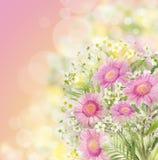 Les gerberas roses fleurit le groupe, fond floral de bokeh Photos libres de droits