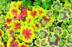 Les gisements de fleur de Carlsbad photos libres de droits