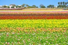 Les gisements de fleur de Carlsbad photo stock
