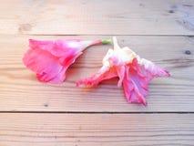 Les glaïeuls fleurissent sur la peinture numérique blanche de fond en bois images stock