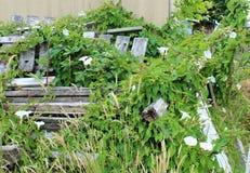 Les gloires de matin assurent un endroit abandonné photo libre de droits