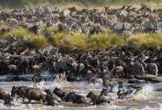 Les gnous traversent la rivière de Mara Transfert grand photographie stock libre de droits