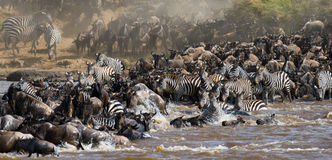 Les gnous traversent la rivière de Mara Transfert grand kenya tanzania Masai Mara National Park photographie stock