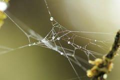 Les gouttelettes d'eau sur le Web du ` s d'araignée Photo libre de droits