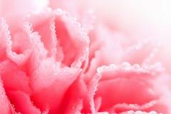 les gouttelettes d'oeillet fleurissent la macro eau Photos libres de droits