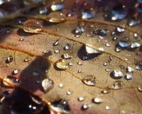 les gouttelettes proches de rosée engazonnent l'eau haute parfaite de matin de lame Photo stock
