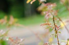 Les gouttes de pluie sur les feuilles vertes fraîches après pluie tombent Photo stock