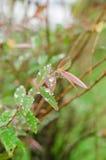 Les gouttes de pluie sur les feuilles vertes fraîches après pluie tombent Images libres de droits