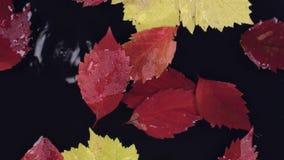 Les gouttes de pluie tombent dans l'eau avec flotter les feuilles rouges et jaunes banque de vidéos