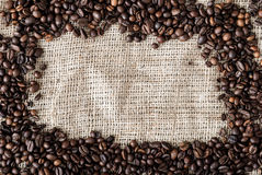 Les graines de café Image libre de droits