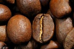 Les graines de café se ferment vers le haut Images libres de droits