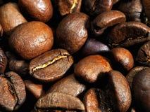 Les graines de café se ferment vers le haut Photo libre de droits