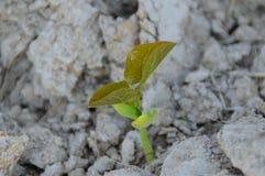 Les graines germent Image libre de droits